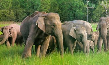 Indien Reisen Safari