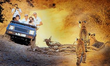 Indien Reisen Ranthambore Nationalpark